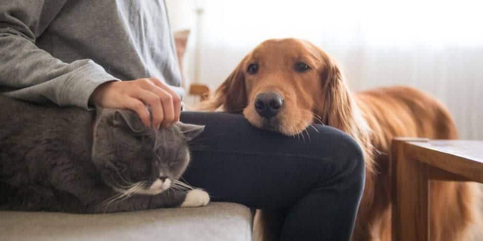 La ville candidate à l'accueil d'une clinique vétérinaire de la fondation Prince Laurent