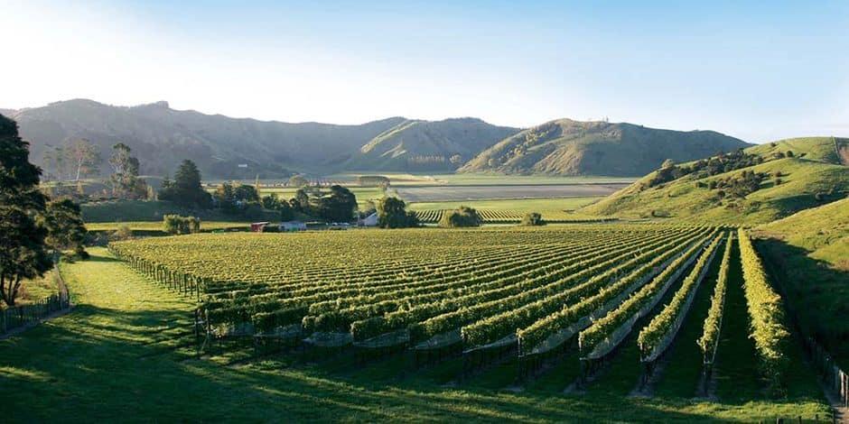 E-wines vous propose: Villa Maria, New Zealand (Marlborough)