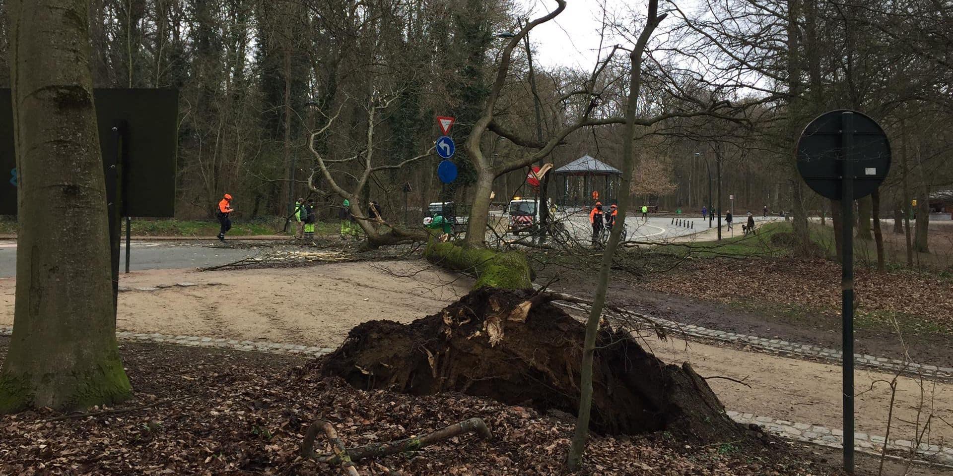 """Un arbre s'effondre juste devant des joggeurs dans le bois de la Cambre: """"Une seconde de plus et on était écrasés"""""""