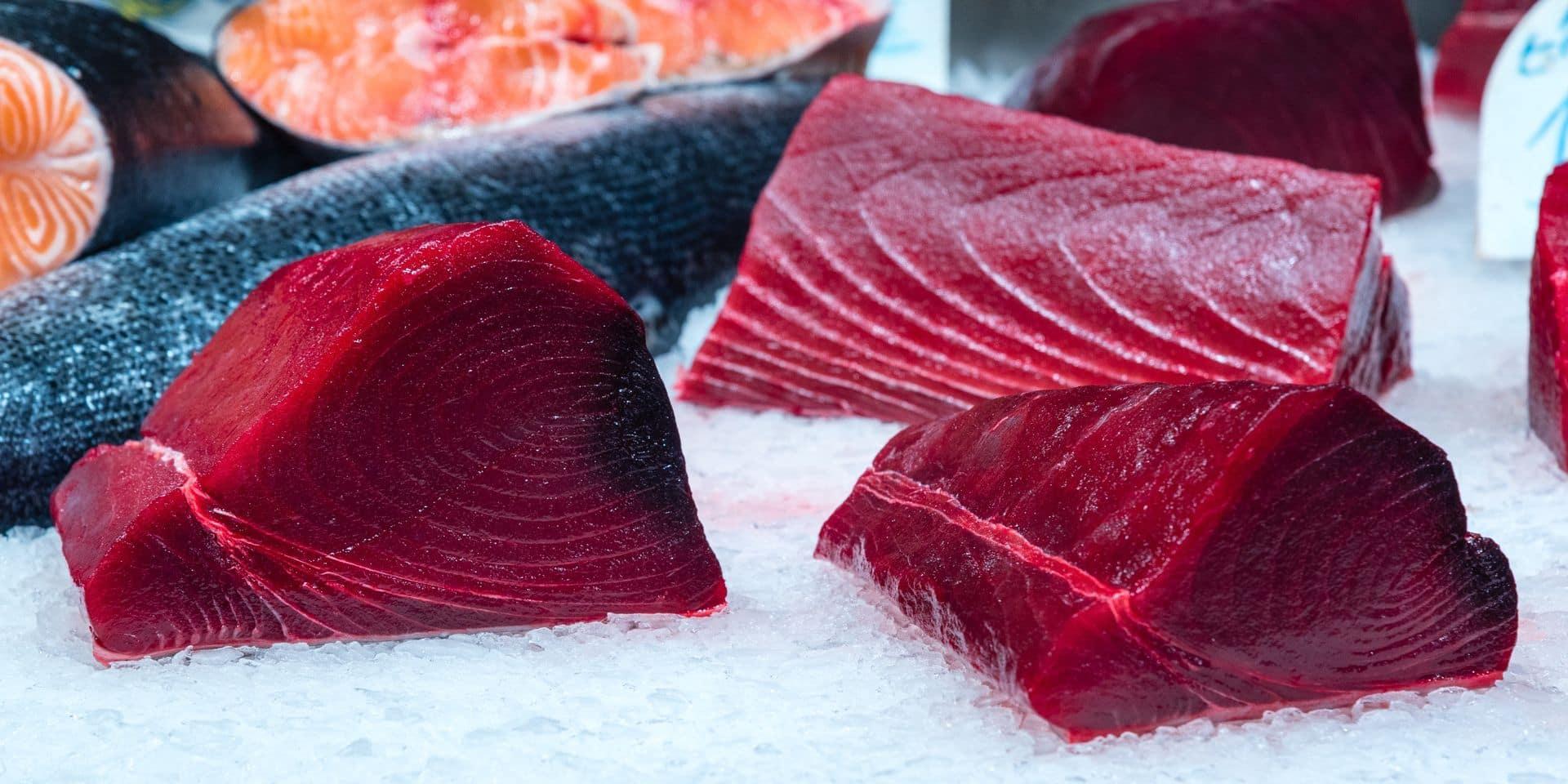 """L'Afsca saisit près de 80 tonnes de thon frelaté : """"Le consommateur risque l'intoxication alimentaire"""""""