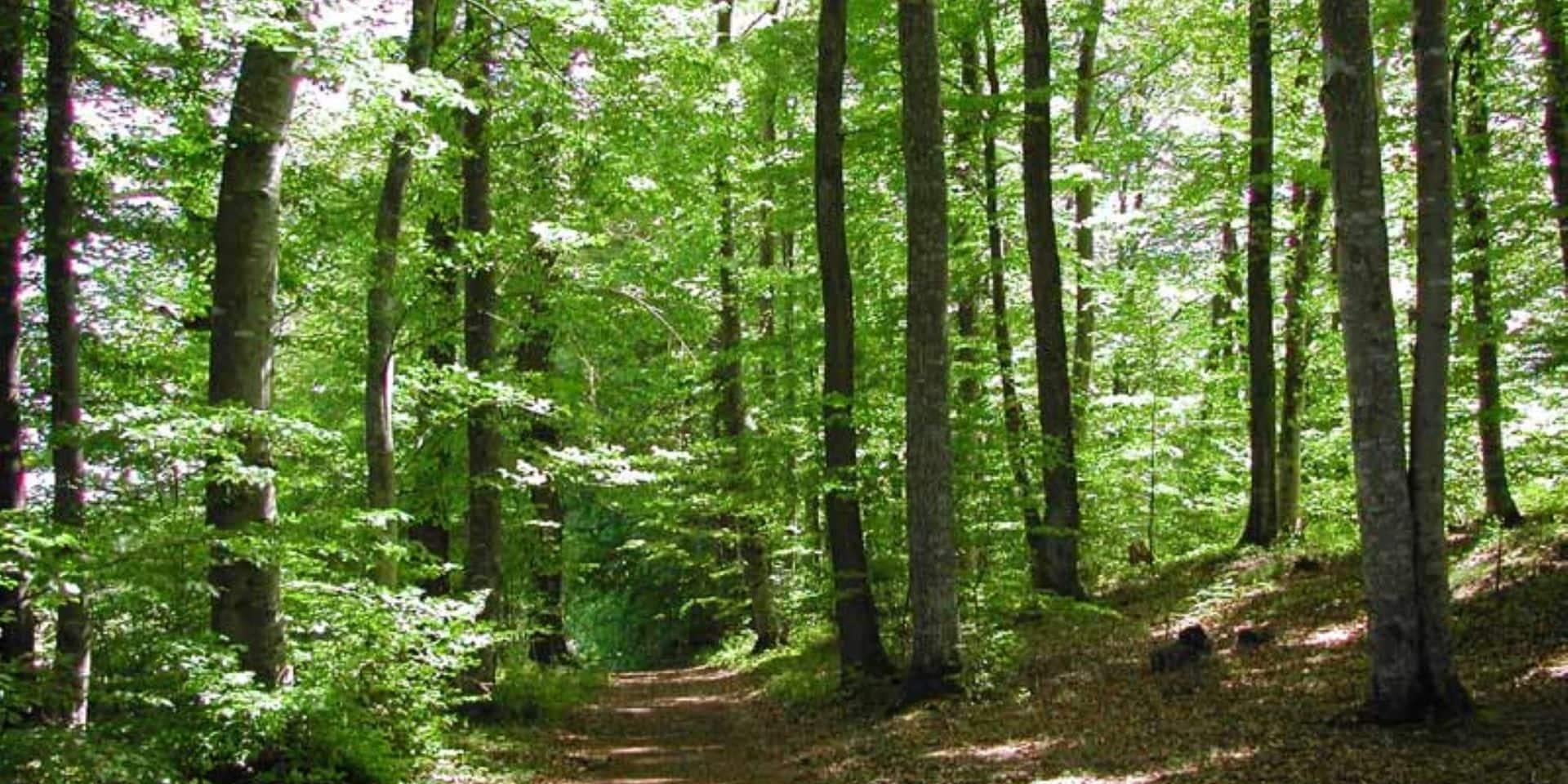 Gestion durable des forêts : une soirée d'information à Houffalize