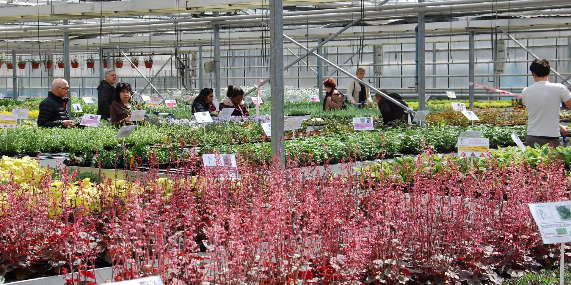 Venez à la rencontre de nos horticulteurs et pépiniéristes wallons