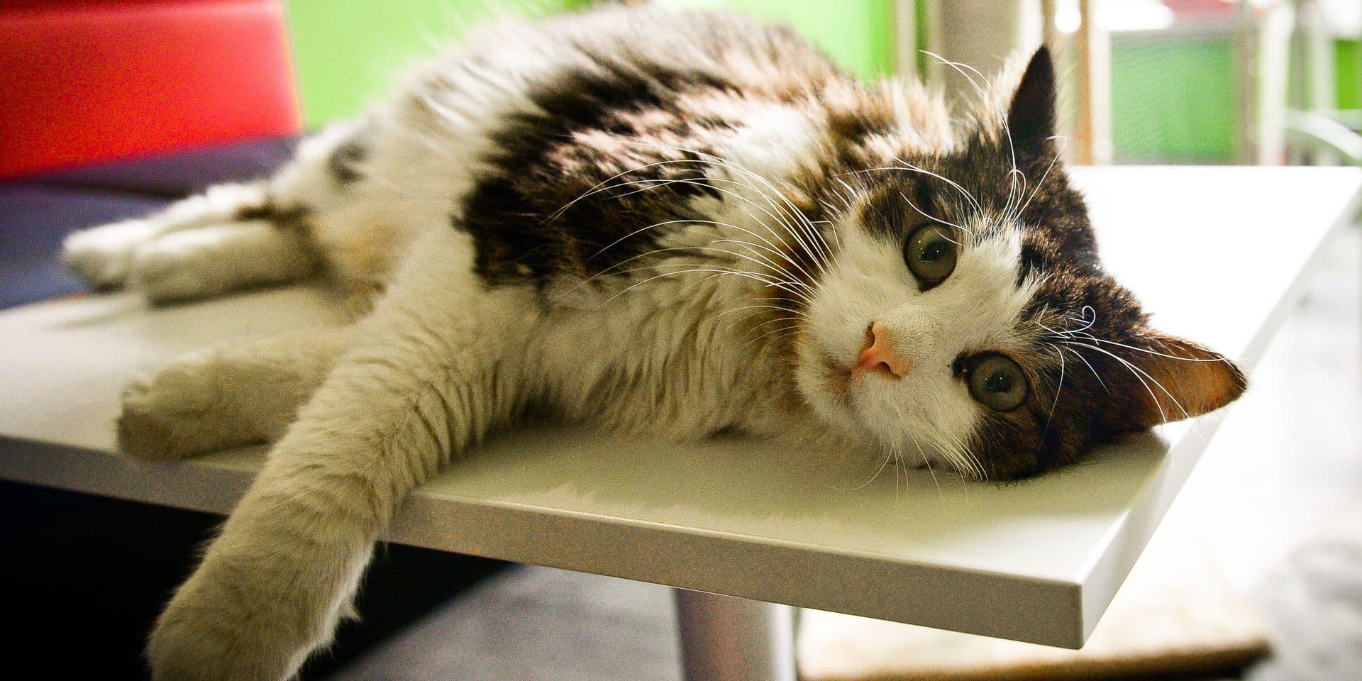 2019, l'année la plus catastrophique pour les chats errants!