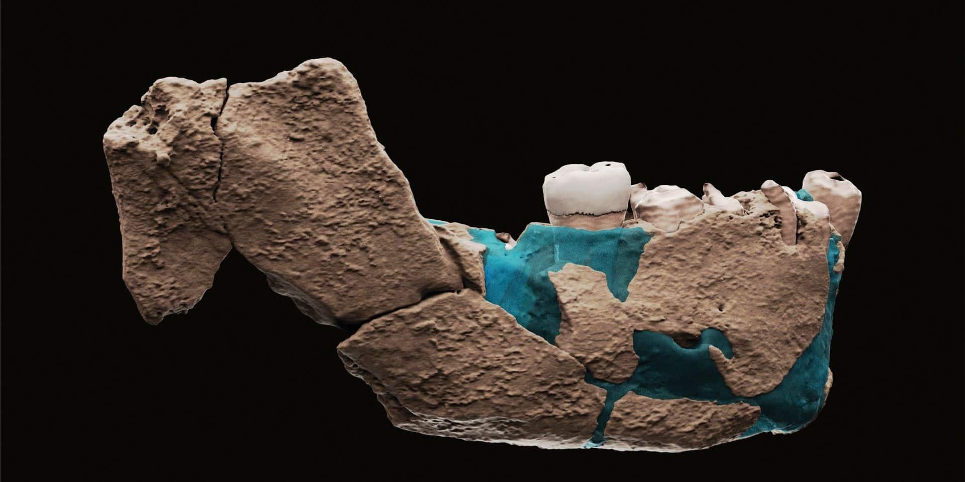 """""""L'Homo Nesher Ramla"""", une nouvelle espèce d'homme préhistorique découverte"""