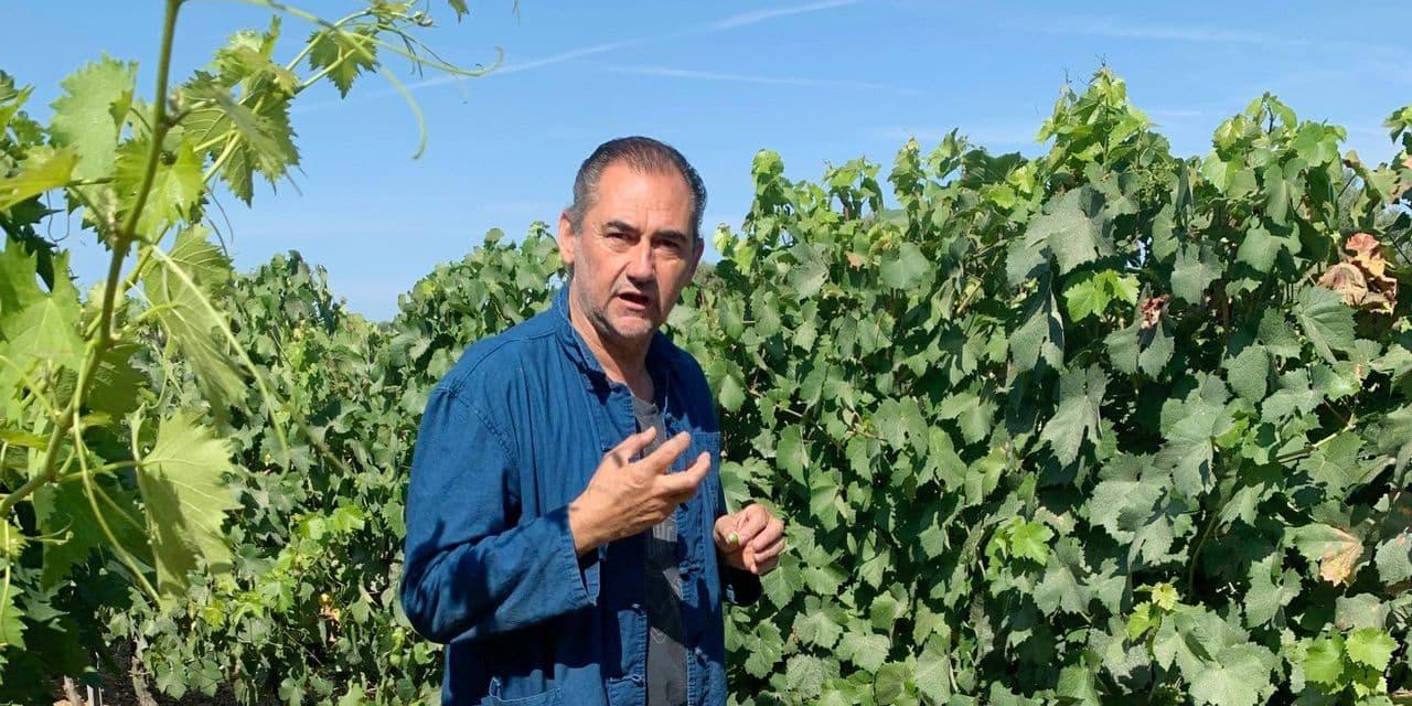 La longue histoire des vignes corses