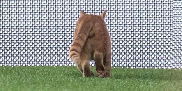 Besiktas doit payer 34.000 euros à l'UEFA à cause... d'un chat!