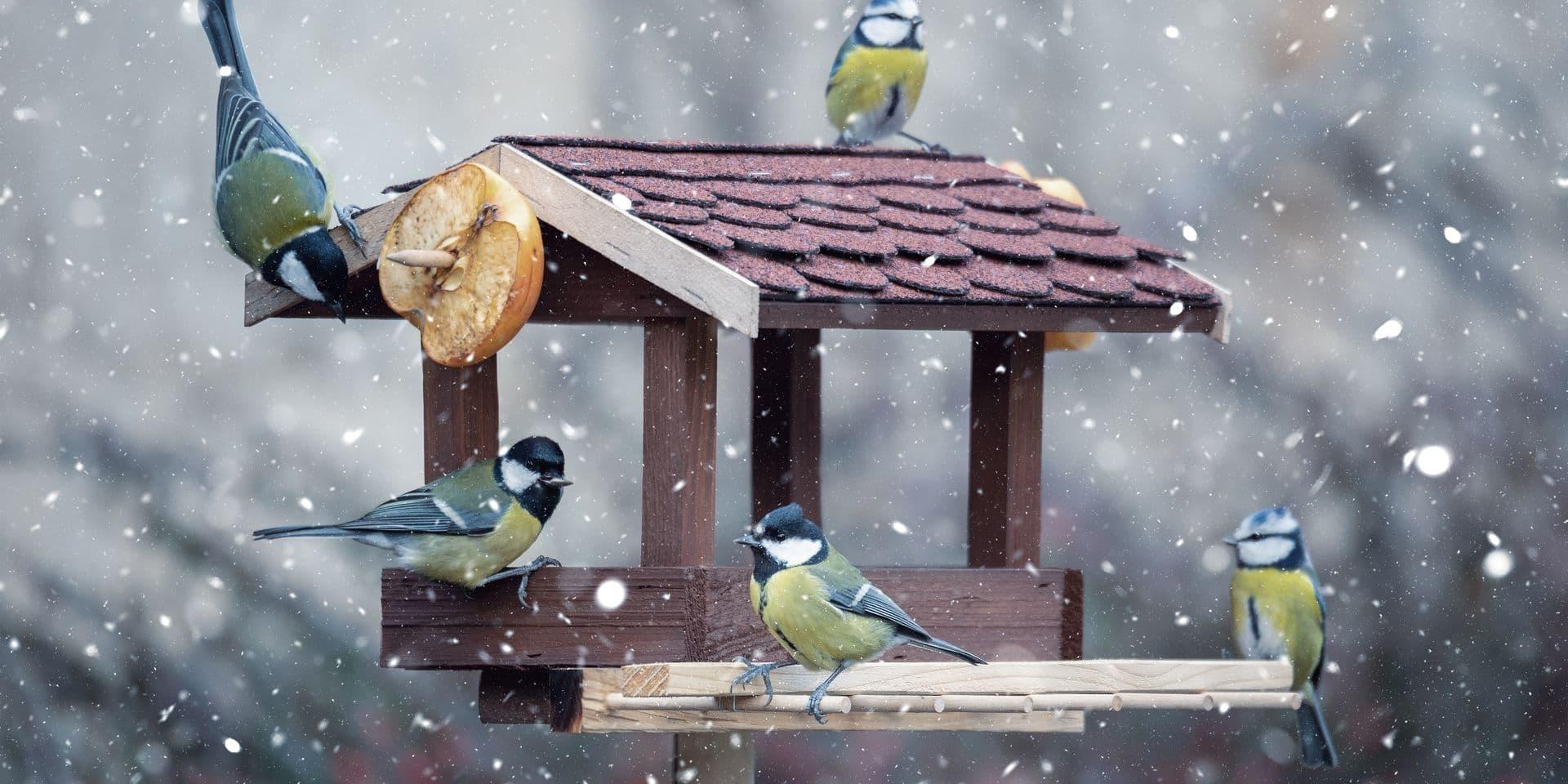 Boules De Graisse Soucoupe D Eau Graines Comment Bien Penser Aux Oiseaux De Nos Jardins Sans Que Cela Ne Leur Soit Nocif Dh Les Sports