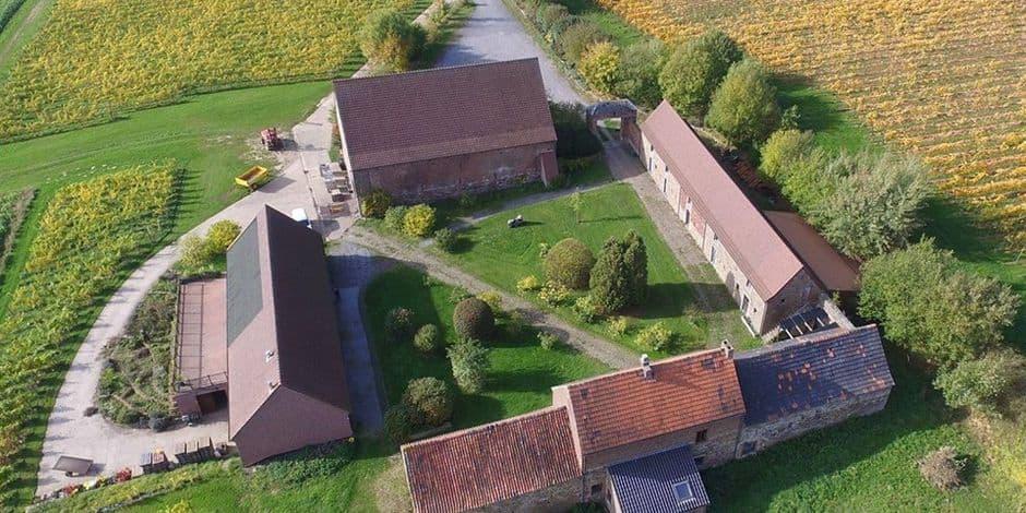 Le domaine du Chenoy à Emines a lancé ses vendanges, comme un peu partout en Wallonie