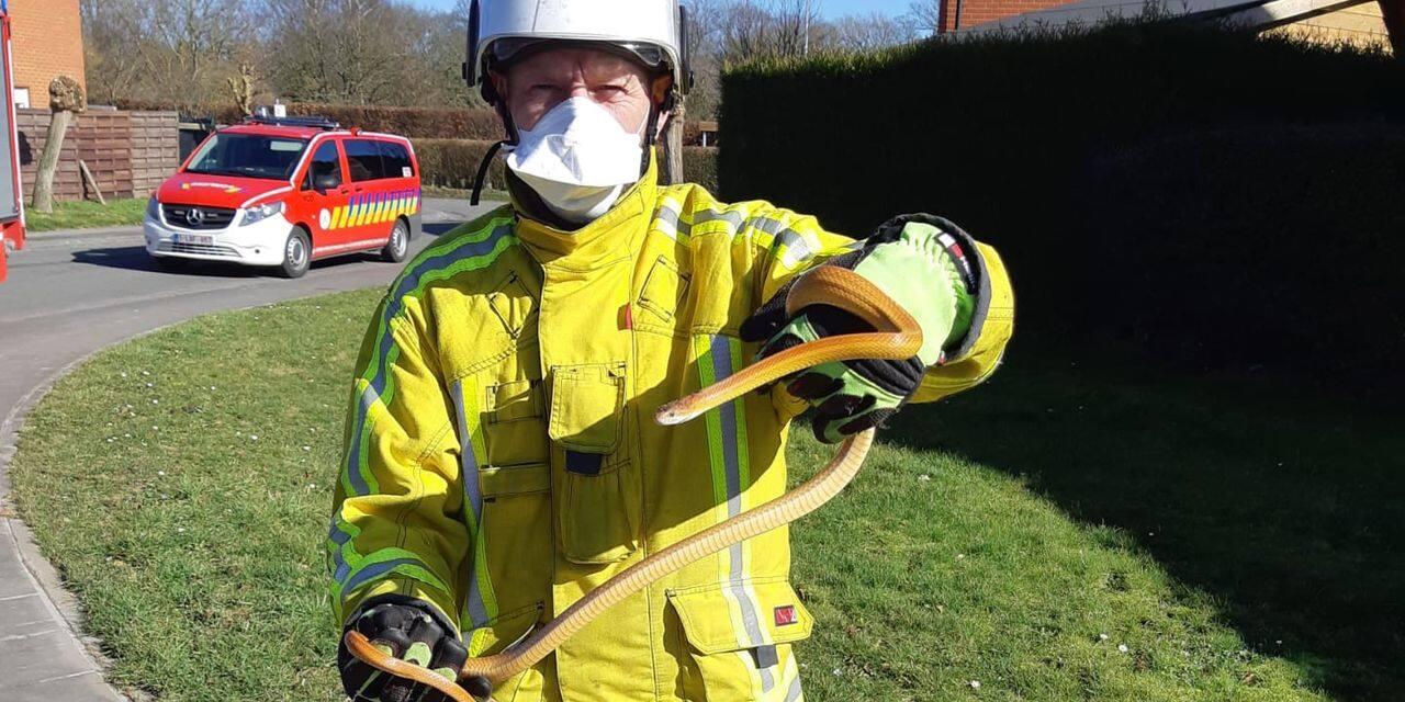 Encore un serpent récupéré par la zone de secours de Wallonie picarde - dh.be