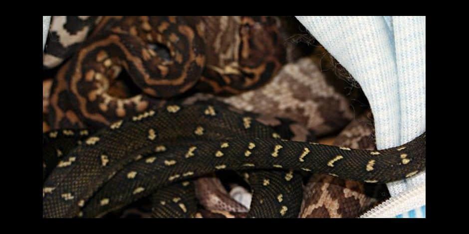 Amougies : un serpent dans le caniveau !