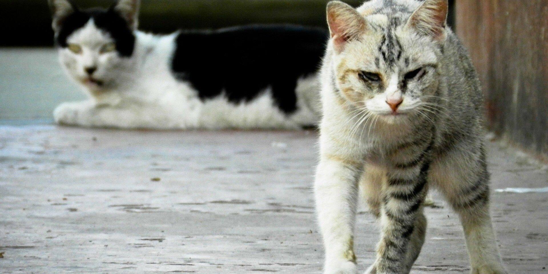 Fleurus lance son plan d'action pour les chats errants