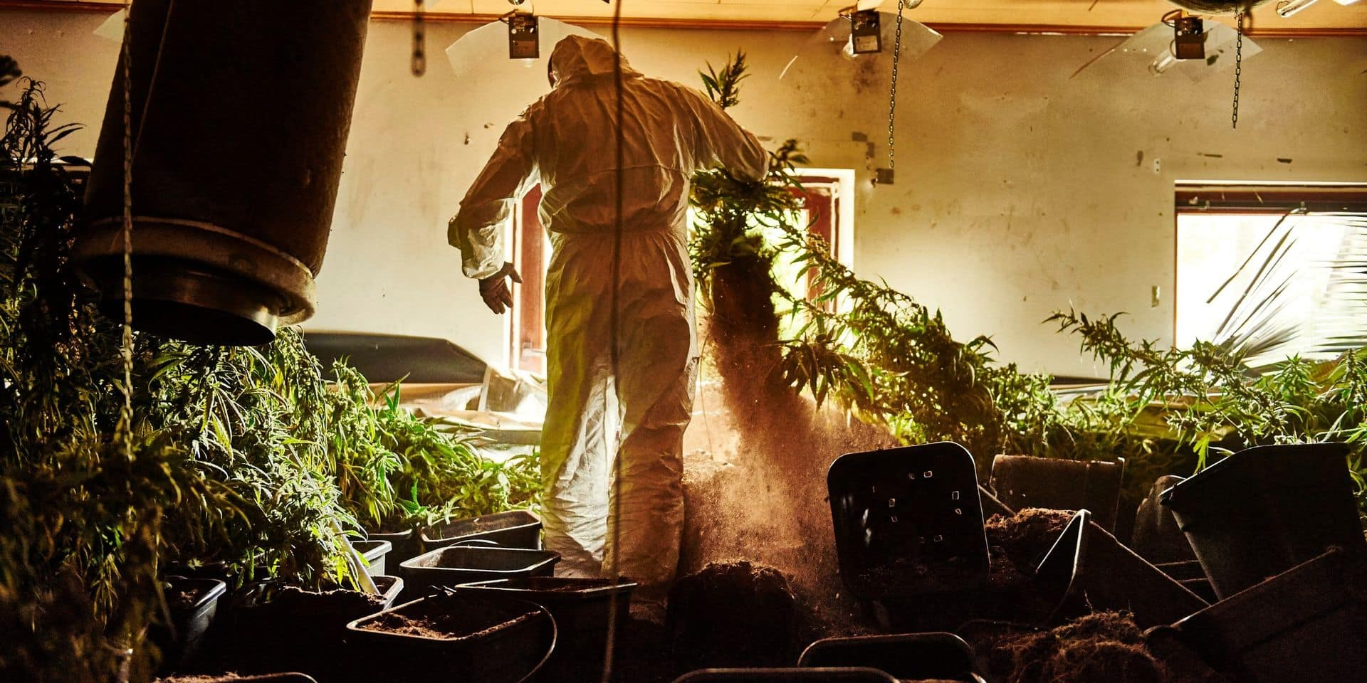 Plantation de cannabis : saisie record à Grâce-Hollogne !