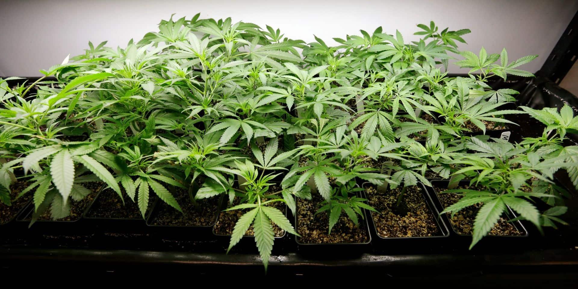 900 plants de cannabis découverts rue Grétry