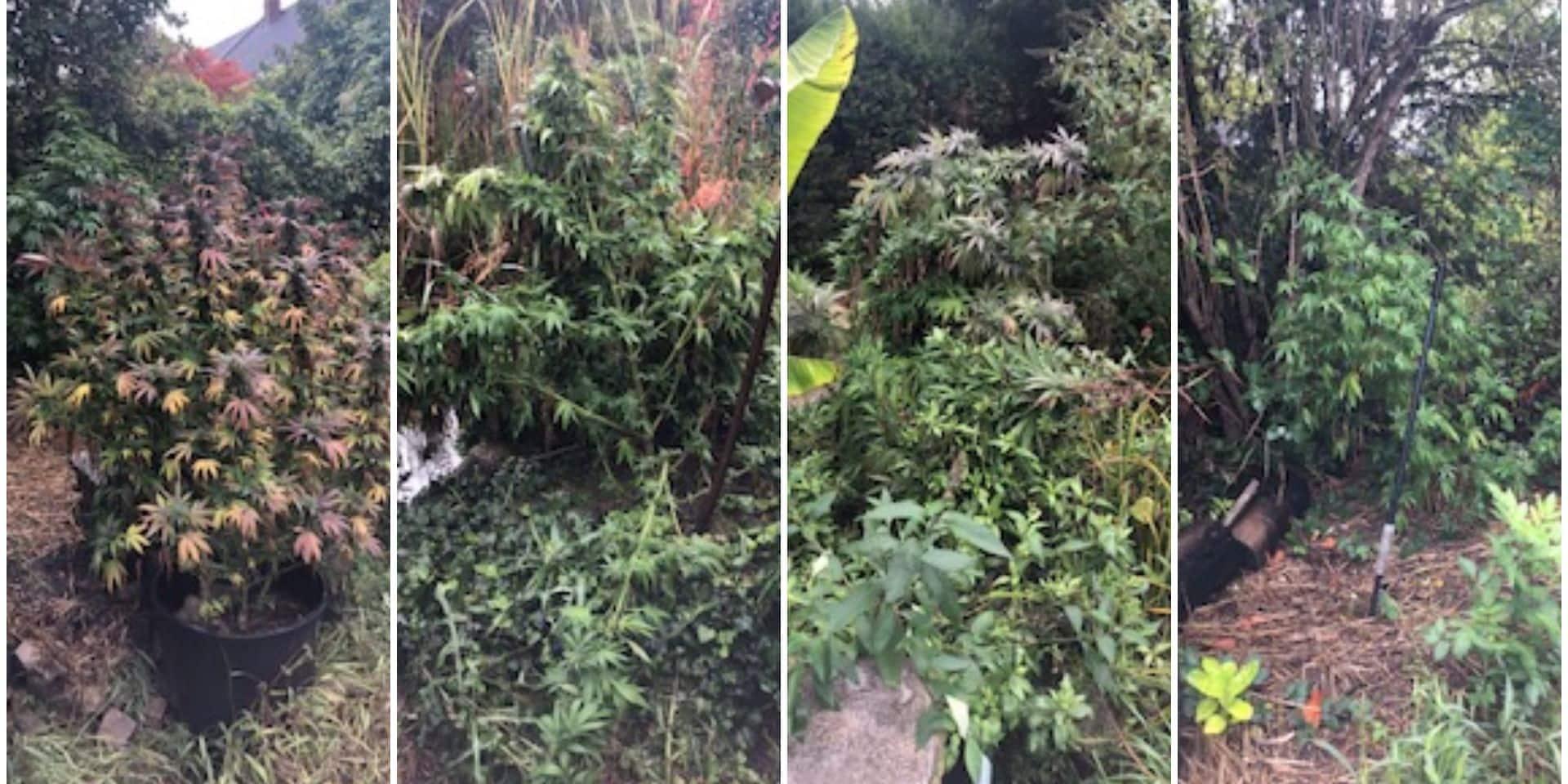 """Un """"jardinier"""" arrêté près de la frontière franco-belge : sa camionnette était remplie de plantes de cannabis"""