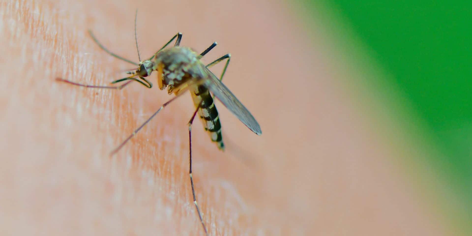 """Un couple du Brabant flamand décédé de la malaria: """"pas de danger pour la population de Kampenhout"""""""