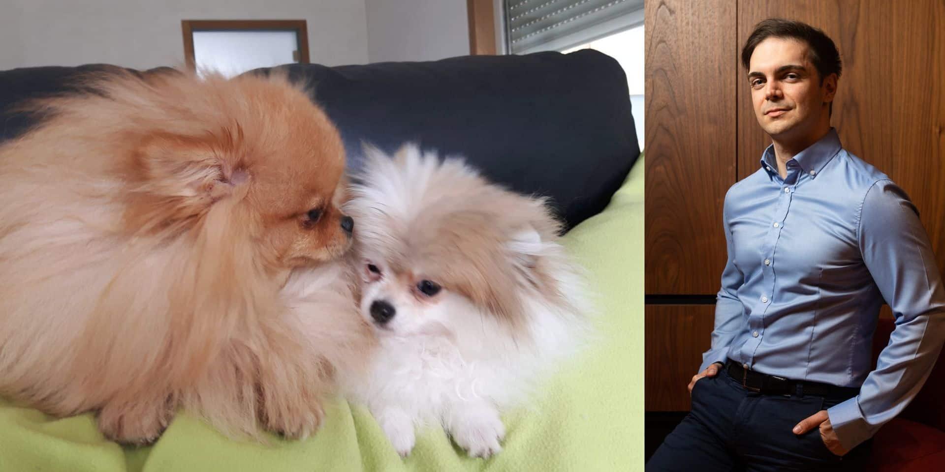 """L'euthanasie de Nino et Foxy aurait-elle pu être évitée ? """"L'Afsca est allée trop loin!"""""""