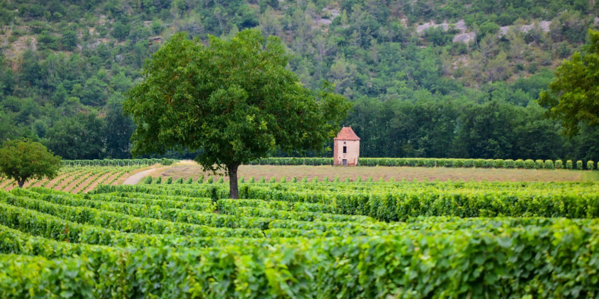 Foire aux vins: A la recherche d'authenticité? Le Sud-Ouest vous ouvre les bras à la Gare Maritime de Tour et Taxis