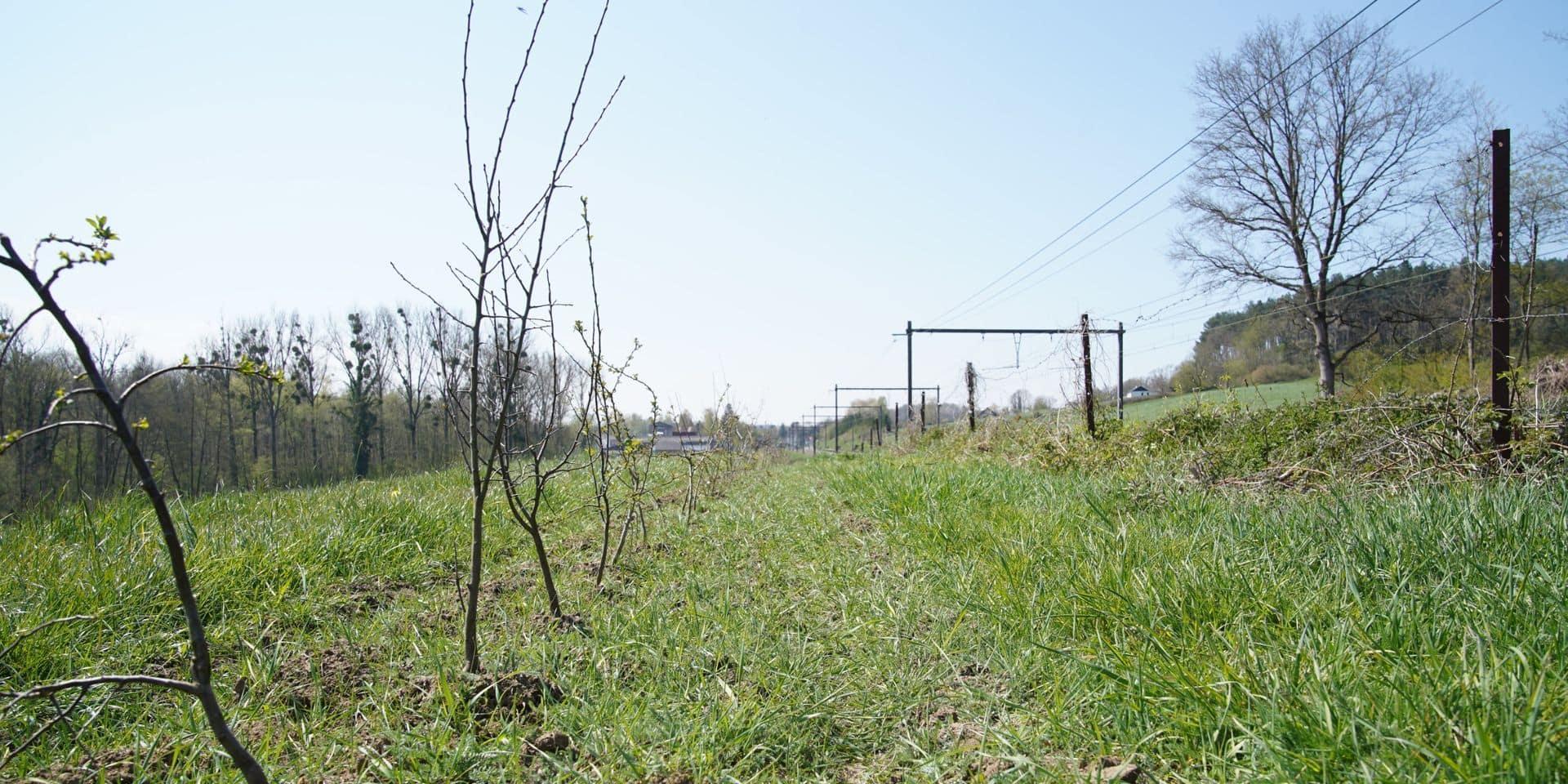 Le bourgmestre de Court-Saint-Étienne empêtré dans un épineux dossier