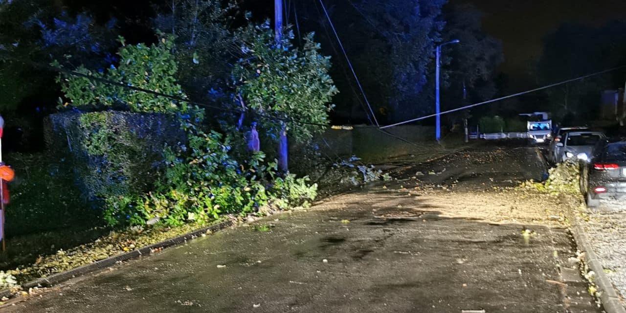 Montigny-le-Tilleul : un arbre tombe sur la route