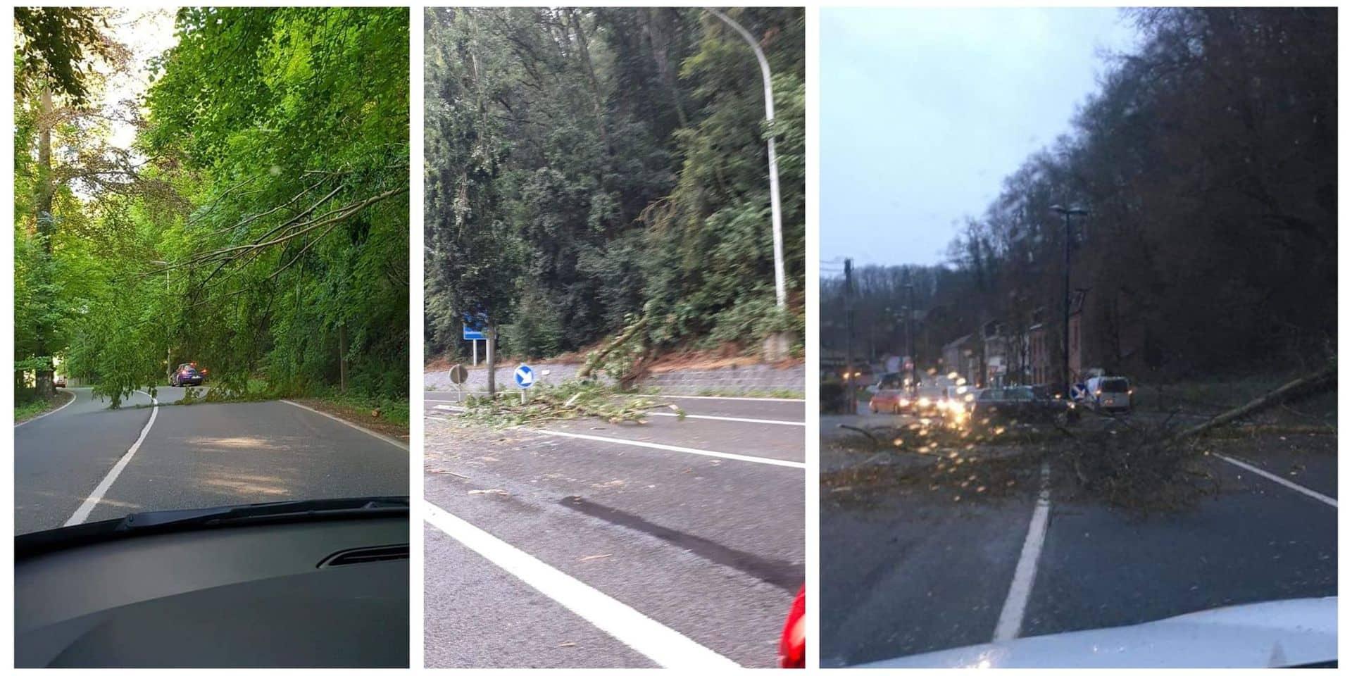 """Anhée: des arbres tombent sur la RN 92. """"Faudra-t-il un accident pour réagir ?"""""""