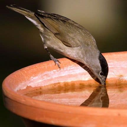 Wallonie Picarde : Pensez aussi à abreuver les oiseaux