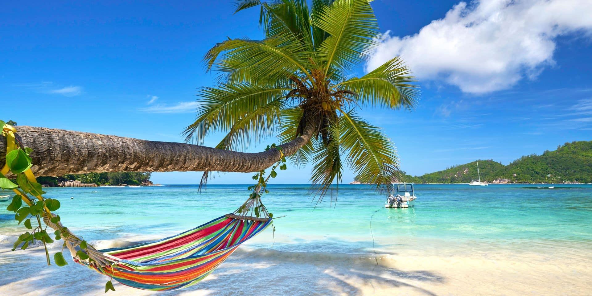 Romantic,Cozy,Hammock,In,The,Shadow,Of,Coconut,Palm,Tree