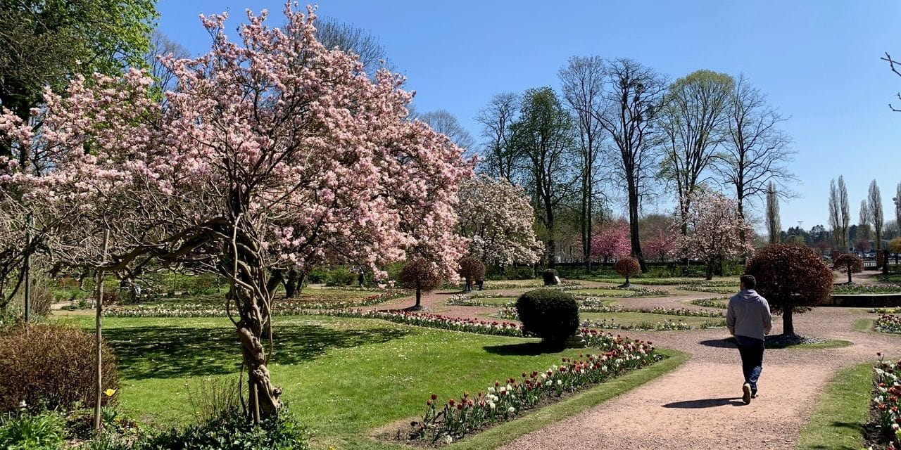 Vol d'un... arbre au parc de la Dodaine à Nivelles