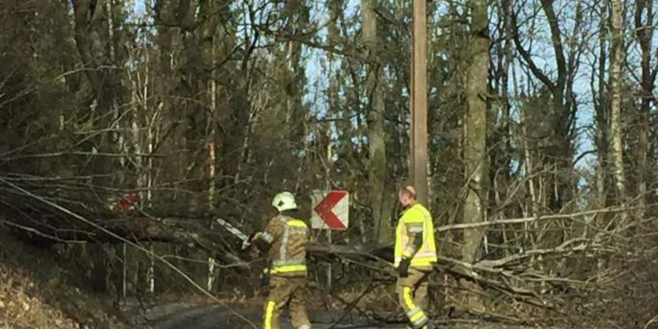 Chute d'arbre sur la N 848 : entrave totale de la circulation
