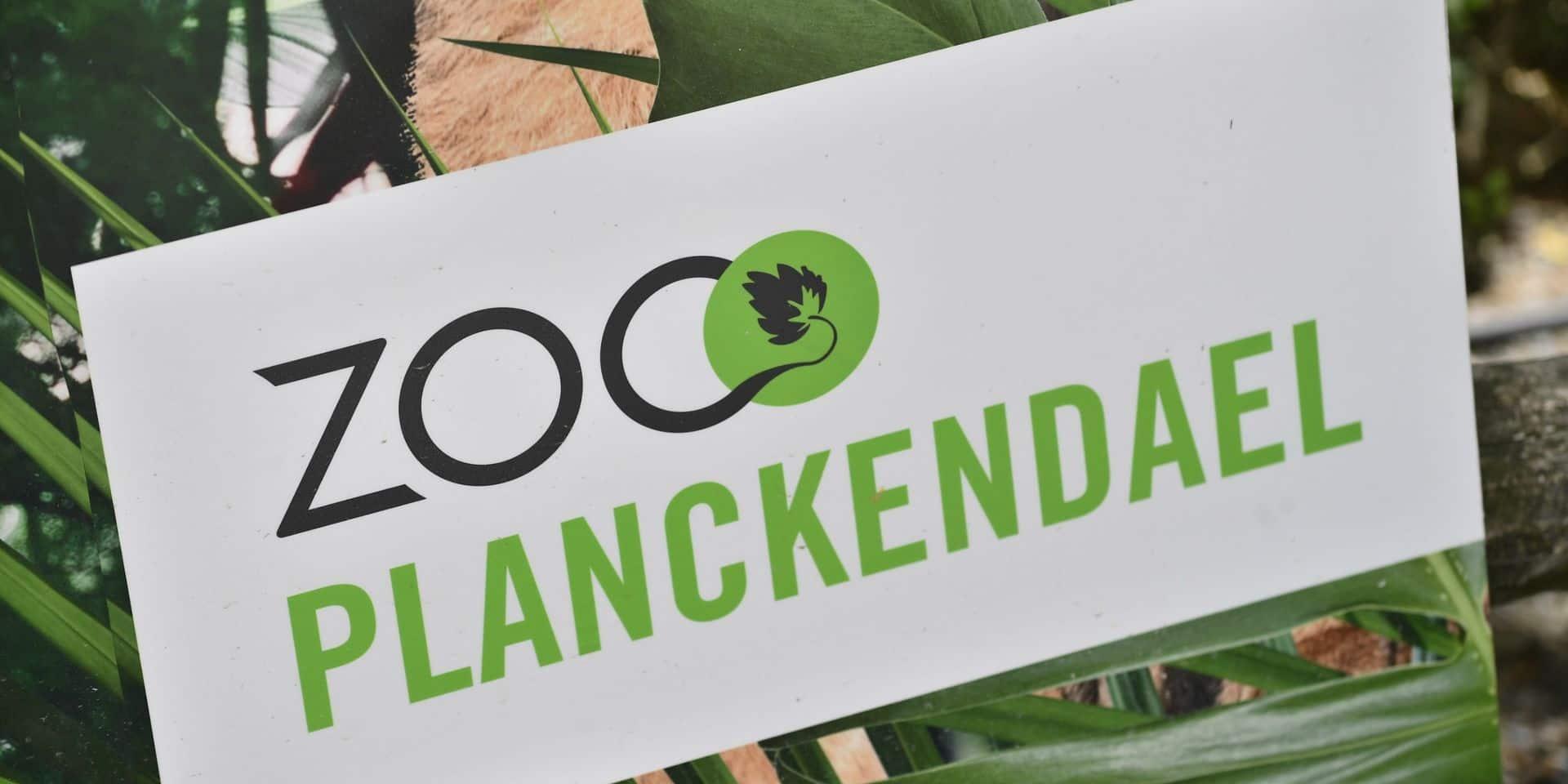 Le zoo de Planckendael reporte l'arrivée d'orangs-outans en raison de la crise du Covid