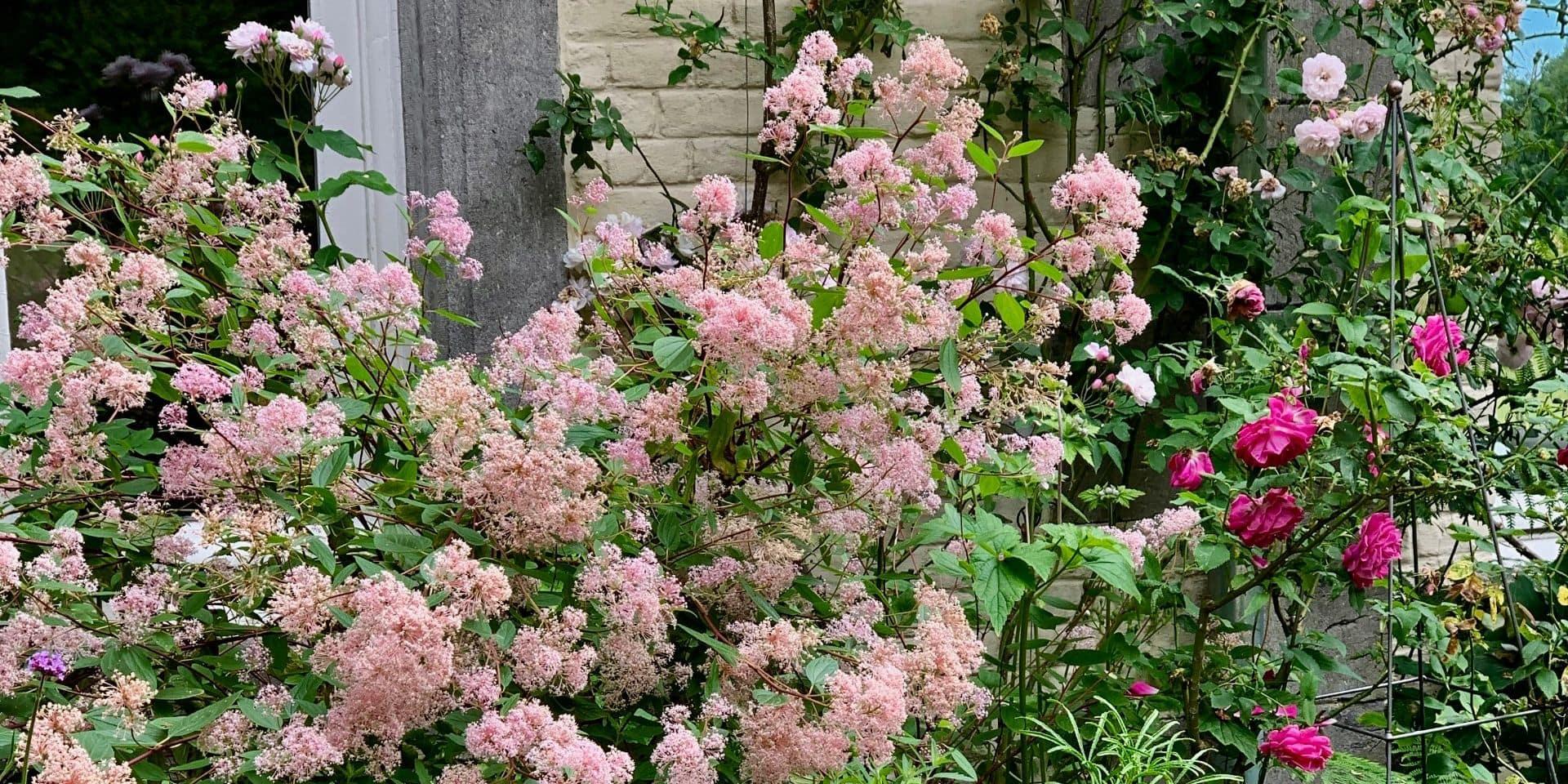 Au jardin : juin, aux portes de l'été, le mois où les floraisons se chevauchent