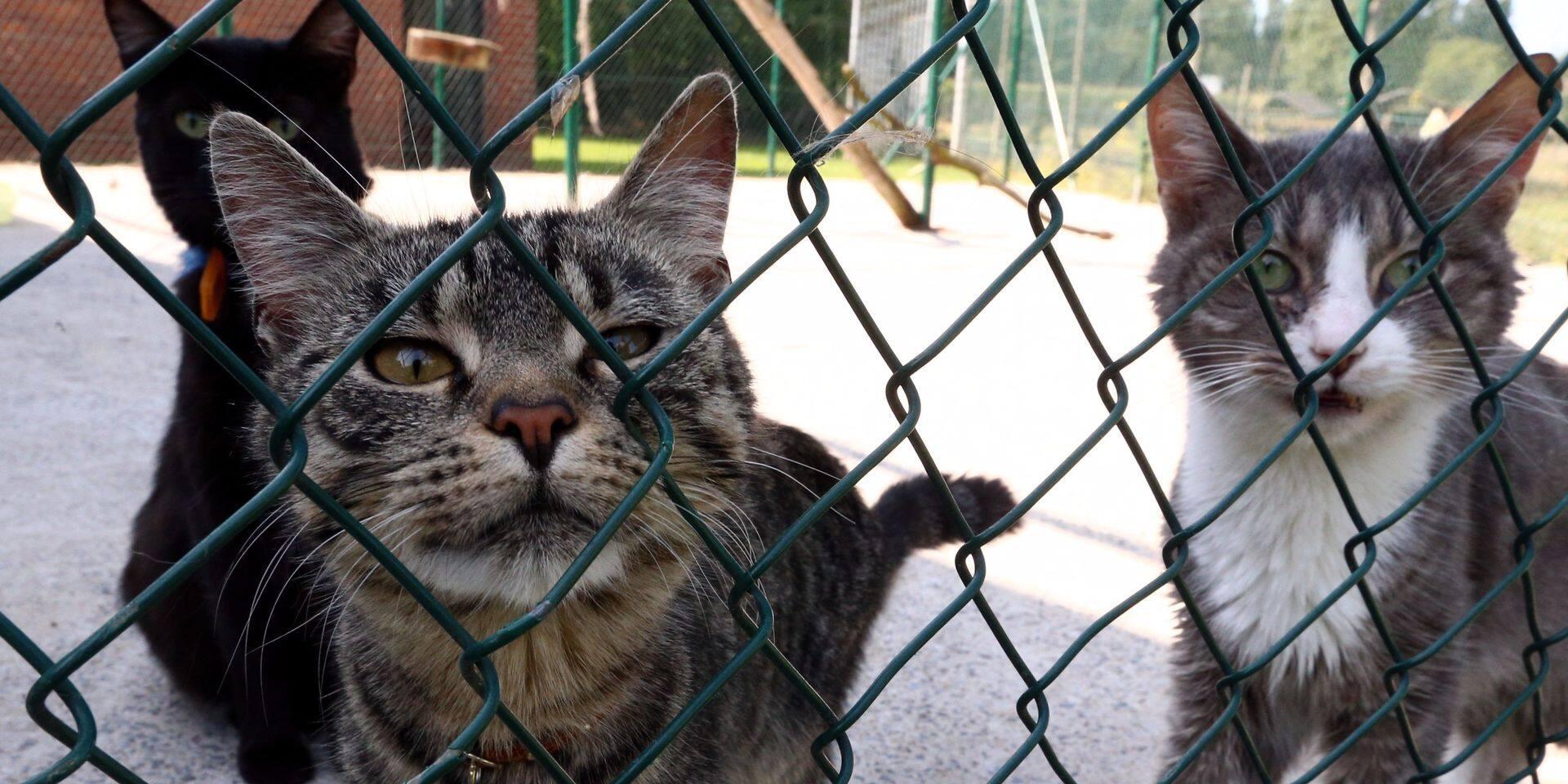 Feluy : Du renouveau à l'ASBL Les Amis des Animaux