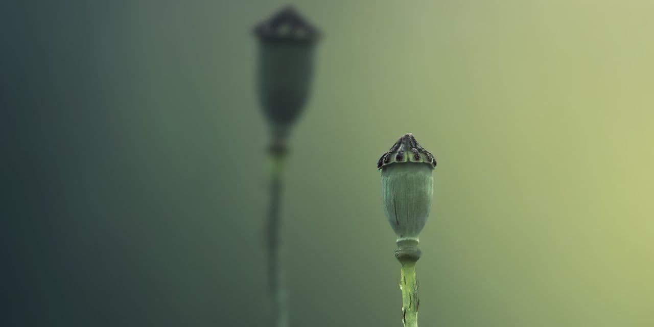 Le Parc Naturel des Hauts Pays lance son 6e concours photo