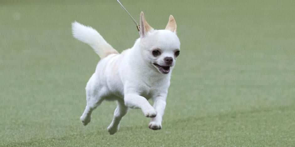 Bien-être animal: Les 105 000 chiens bruxellois mis à l'honneur pendant une semaine