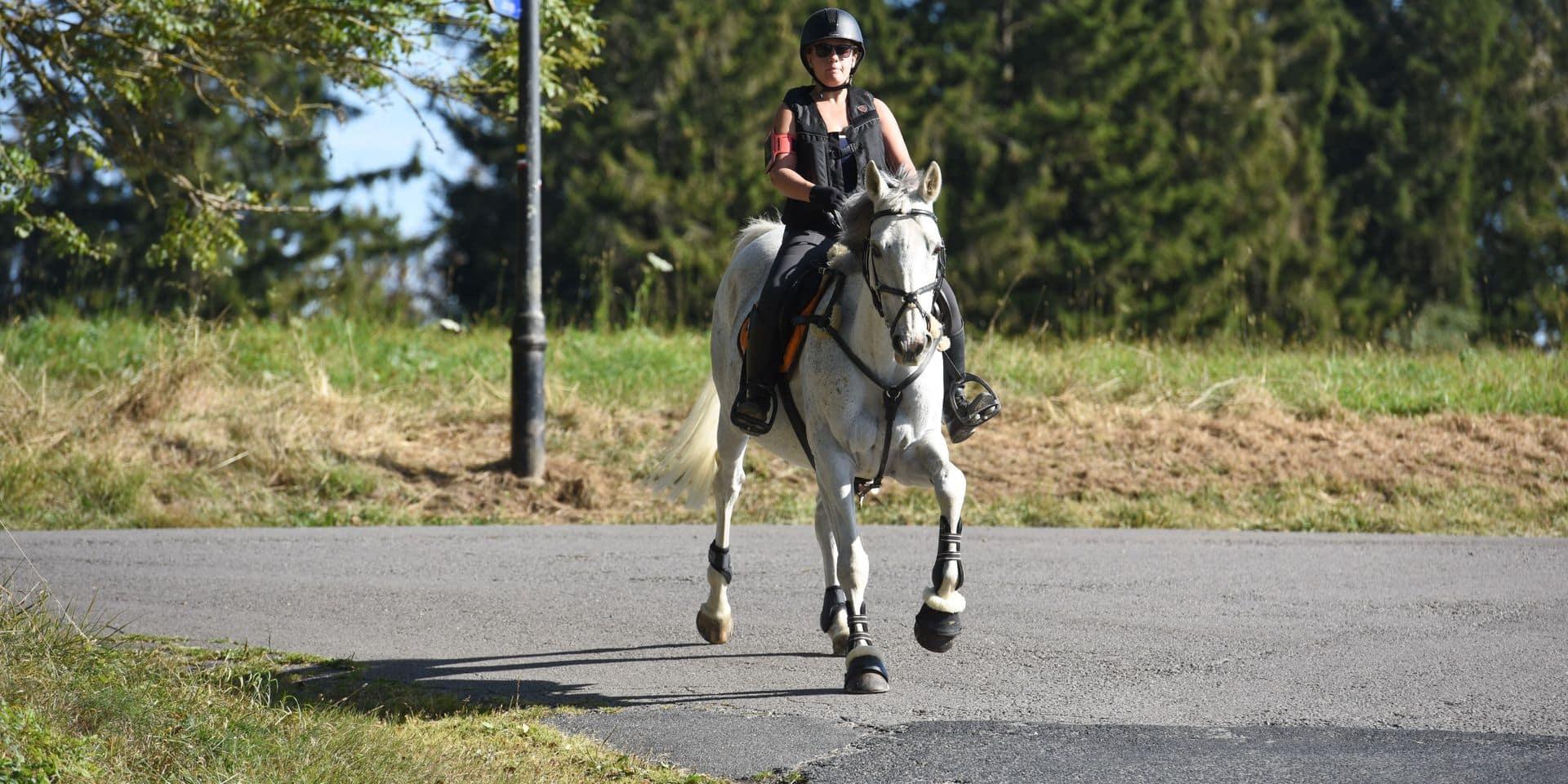 Un vol a été commis dans un club d'équitation à Péruwelz