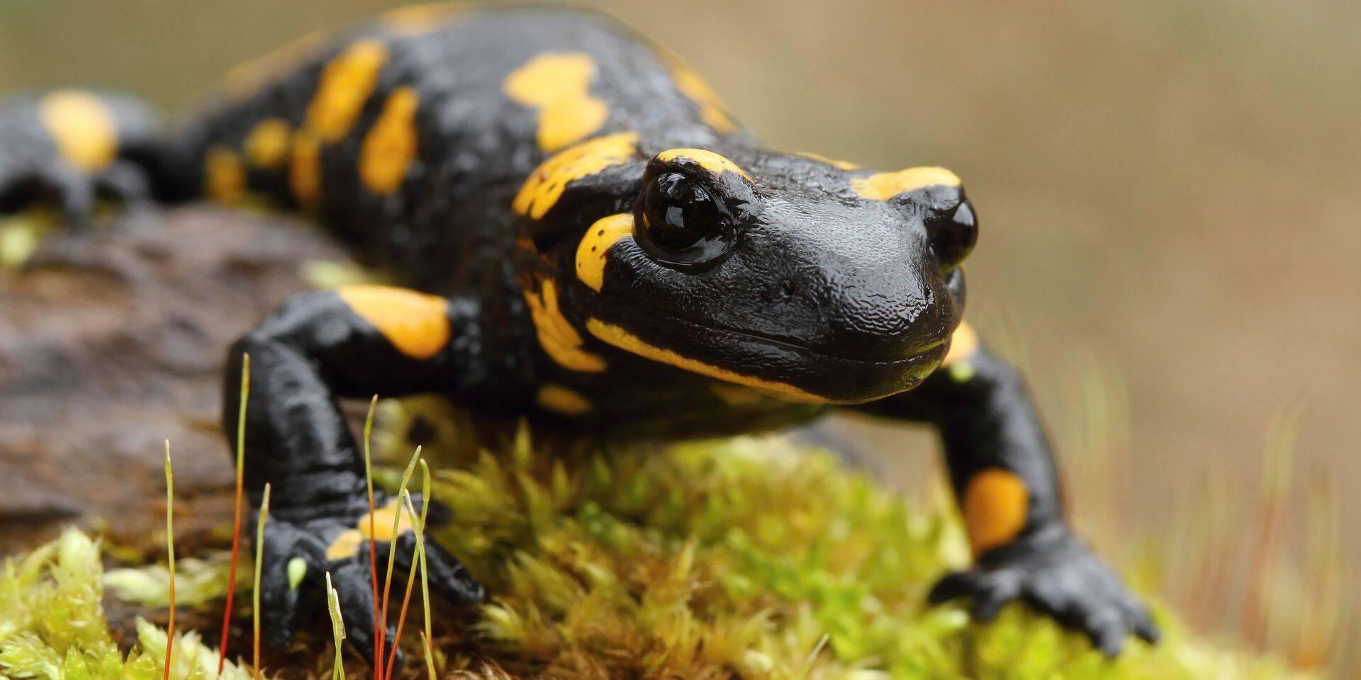 Un rapport inédit démontre que la biodiversité a atteint un niveau historiquement bas