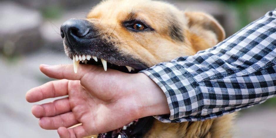 Courcelles: Roland écope de la prison ferme pour avoir lâché ses deux chiens sur Édith