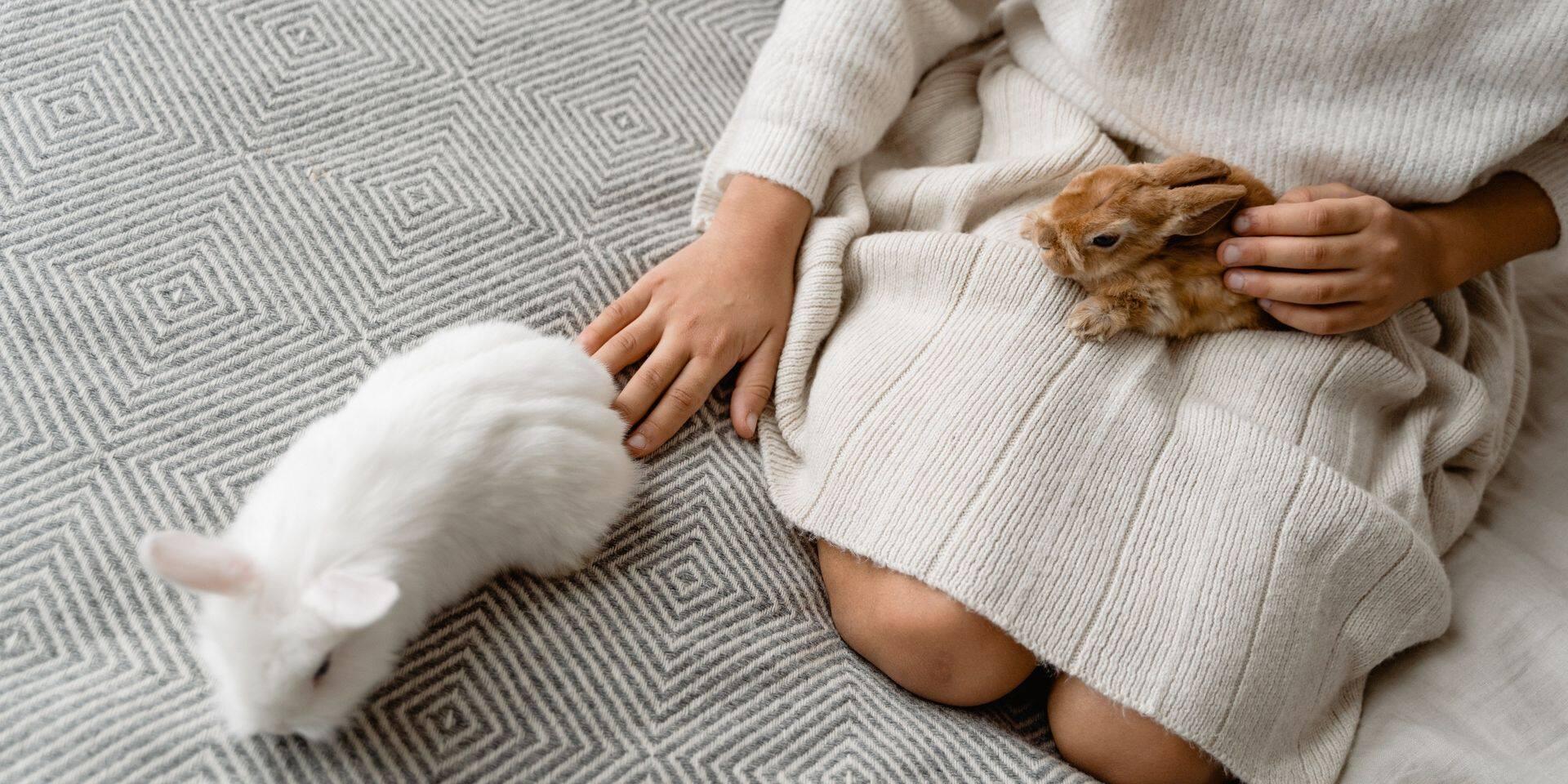 Rush sur les lapins : attention, ce n'est pas forcément le compagnon idéal !