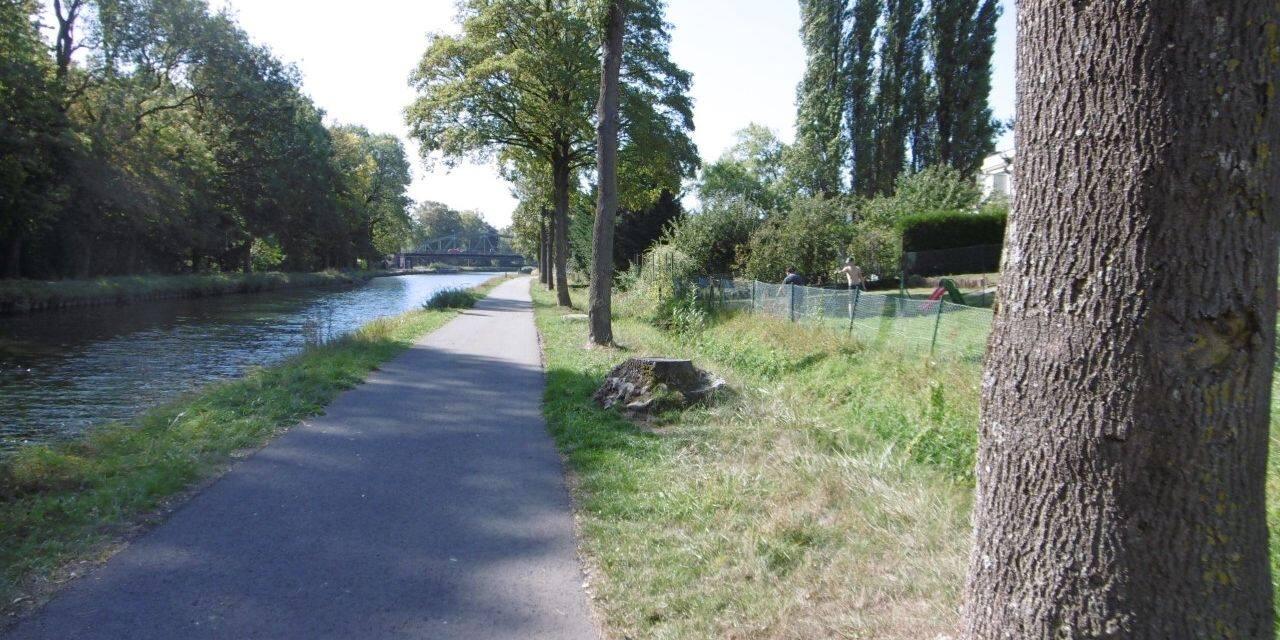 Les arbres qui bordent les berges du canal du centre historique vont être abattus