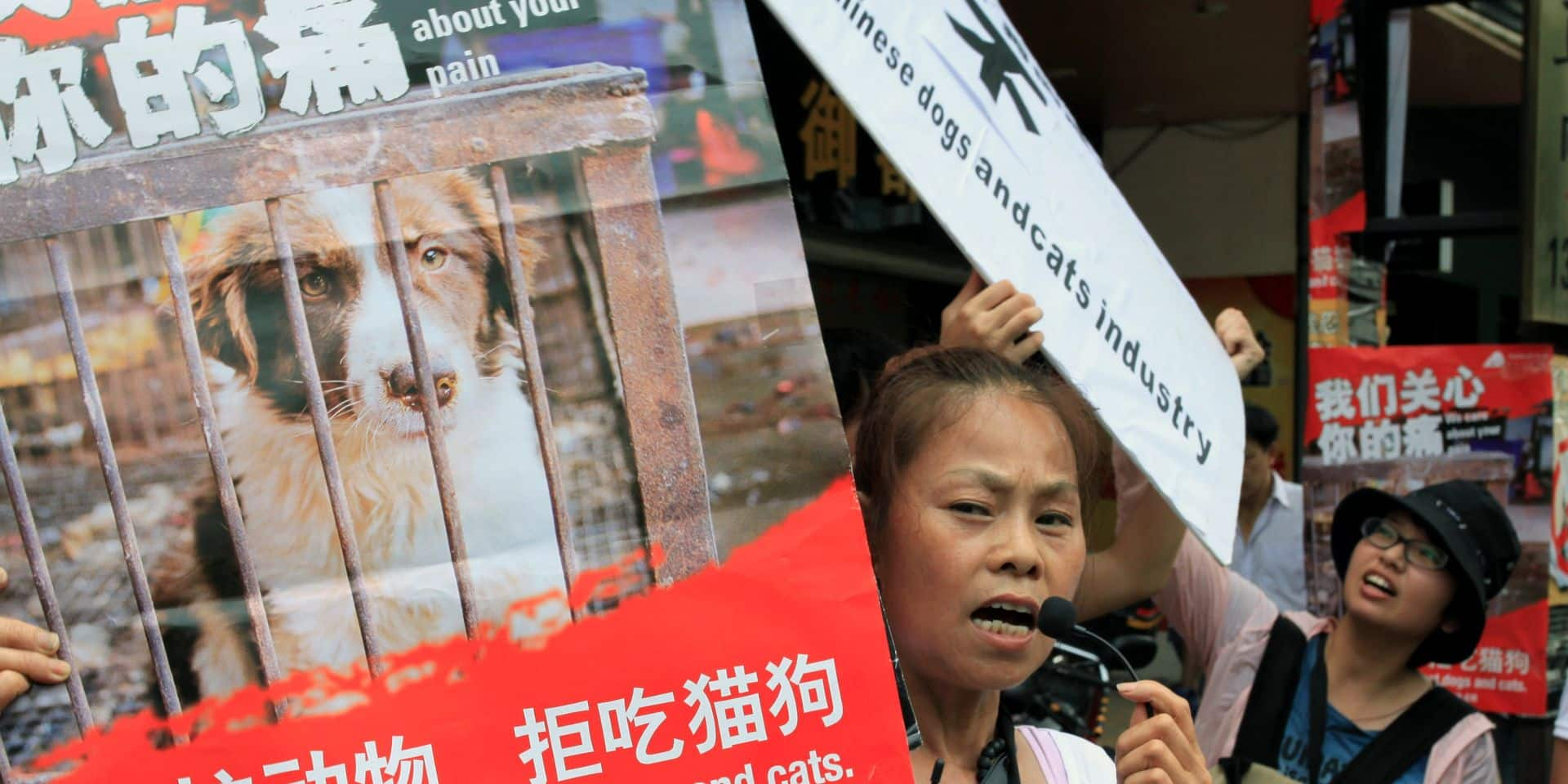 Coronavirus: la Chine veut interdire la consommation de chats et de chiens