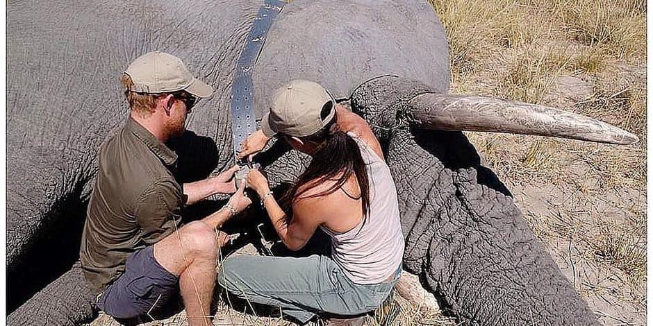 Meghan et Harry auprès des éléphants