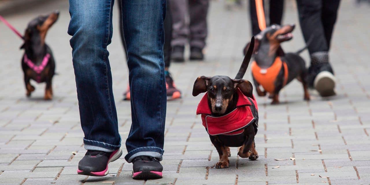 Coronavirus: un chien a été testé positif et placé en quarantaine