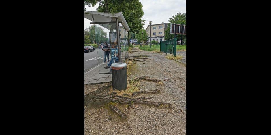 Anderlecht : l'arrêt de bus près de l'hôpital Bracops Lambert inaccessible aux PMR depuis plusieurs années