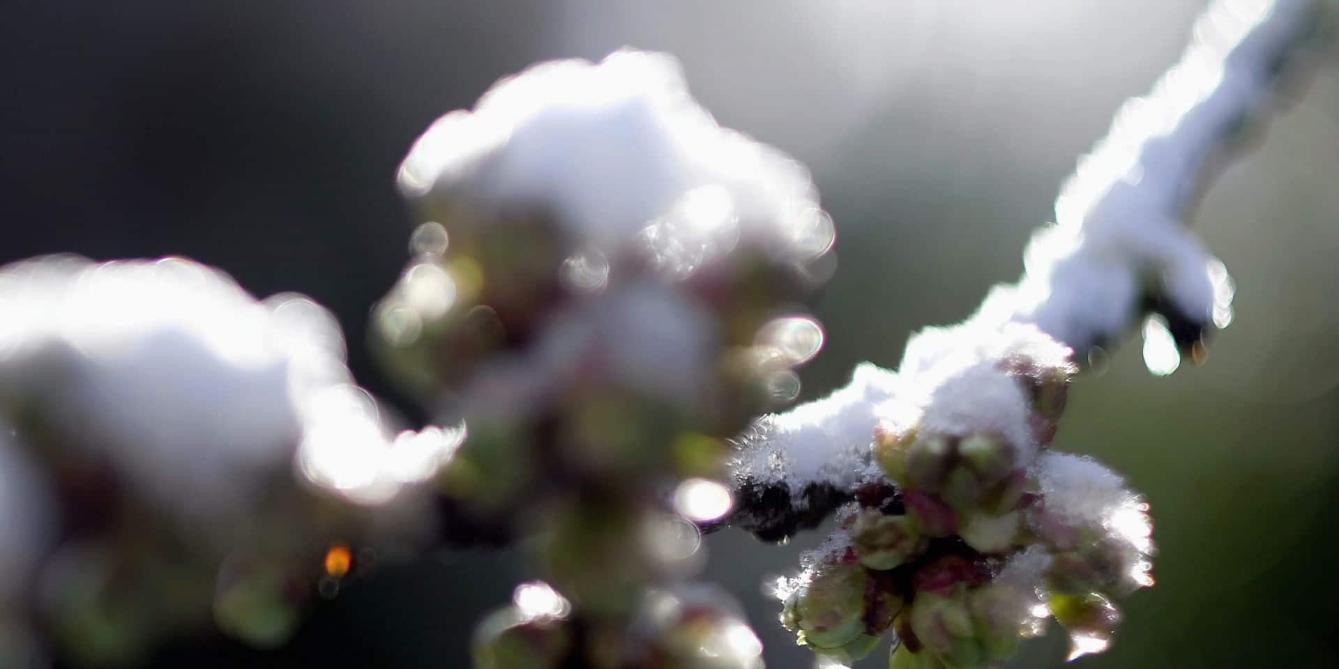 Météo: un possible retour de la neige en Belgique ce dimanche, neige et pluie au programme avant un début de semaine plus sec