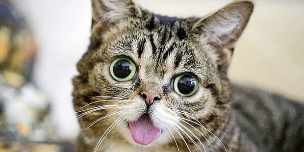 les photos de la chatte filles nues chatte photos