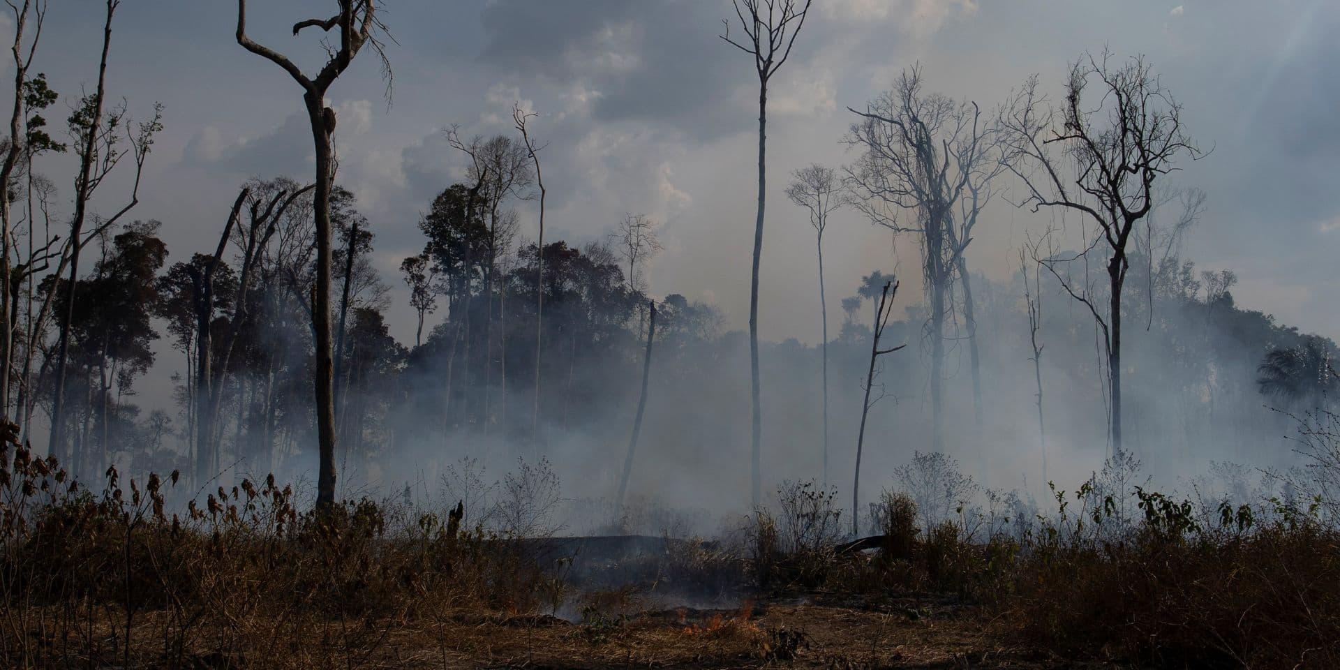 La Belgique contribue à la lutte contre les feux de forêt en Amazonie