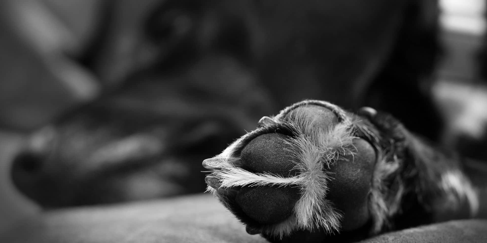 Sous la pression de son voisinage qui lui a envoyé une lettre anonyme, elle décide d'euthanasier son chien