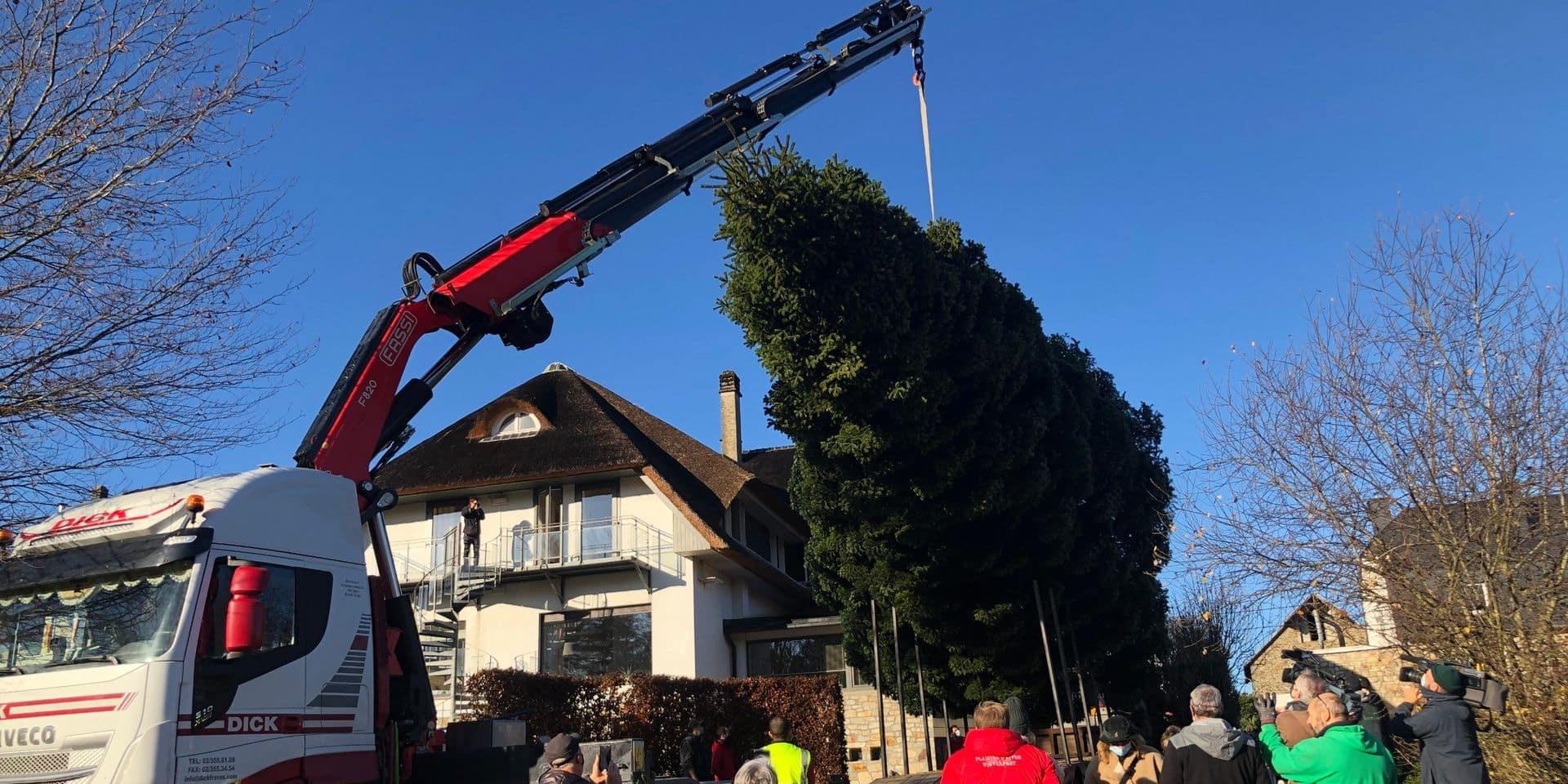 Waimes : le sapin de Noël a été coupé !